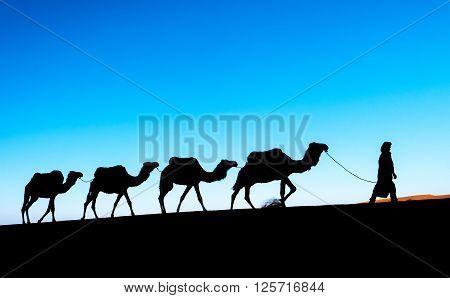 Camel caravan on the Sahara desert. Morocco, Africa