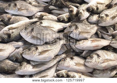 Fresh Sea Bream Catch of Fish at Market