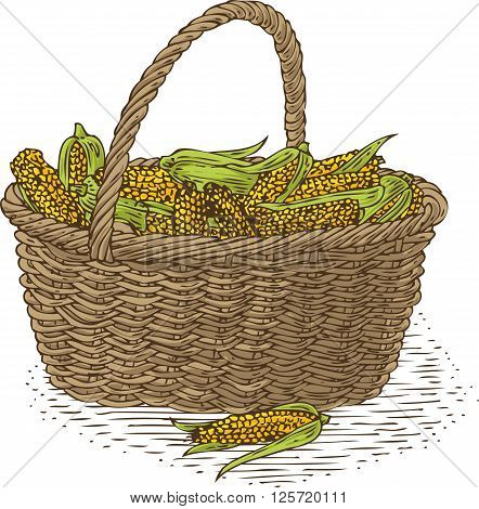 Wicker Basket with Ripe Yellow Corn. Isolated on a White Background