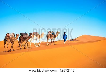 Camel caravan on the Sahara in Morocco