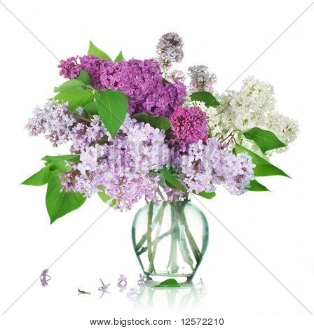 Beautiful Bunch of Lilac in the Vase