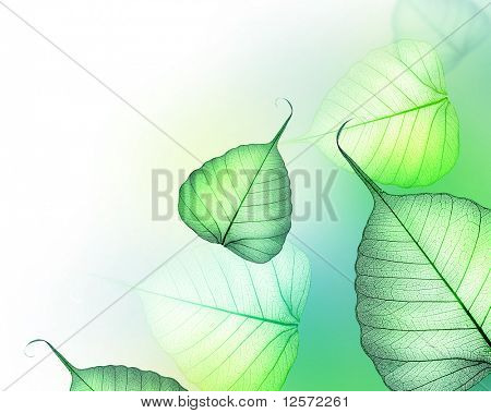 Beautiful Green leaves border.Floral Design