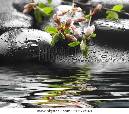 Spa Zen Stones in water