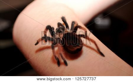 Big hairy spider crawling on his hand ** Note: Shallow depth of field