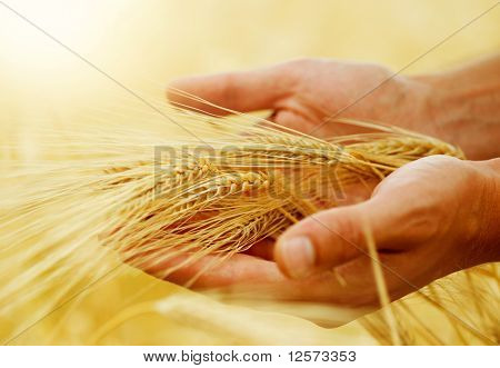 Wheat.Harvest Konzept