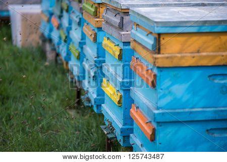 Honey bee hives in garden