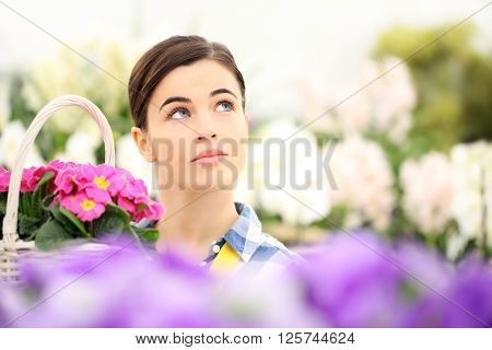 springtime woman in garden looking up with white wicker basket flowers of purple primroses