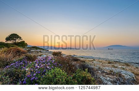 A carpet of blooming flowers and thrift on cliffs of tropical wild beach with lonely tree and boat. Sunset view in Zakynthos island Greece