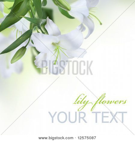 Beautiful Lily Flowers Border.Isolated on white