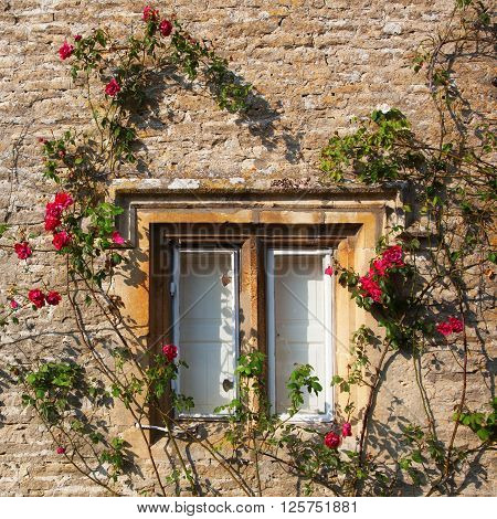 rose clad window of a stone cottage