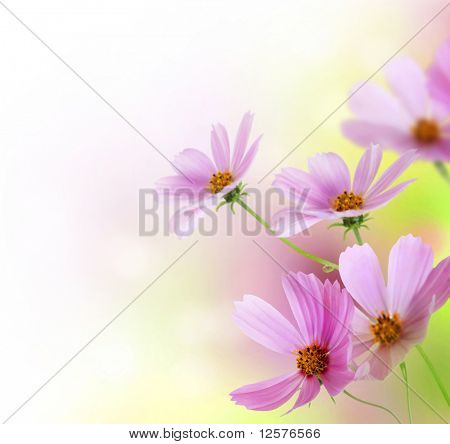 Beautiful Flowers Border.Floral design over white