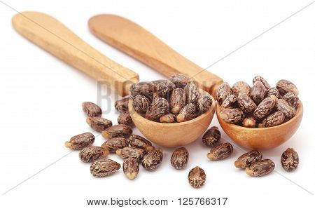 Castor beans in wooden spoon over white background