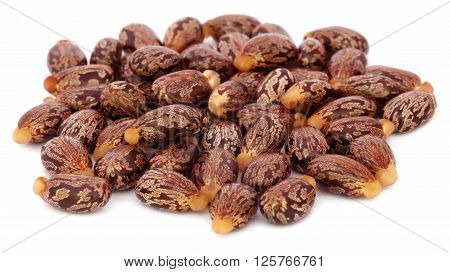 Close up of Castor beans over white background