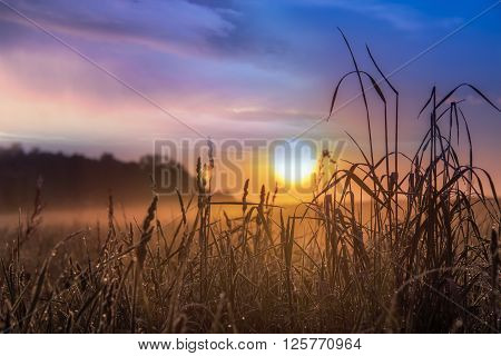 Summer landscape in a meadow and majestic sky on sunrise