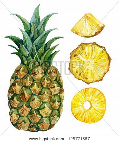 watercolor pineapple set isolated on white backgound. Hand painted illustration