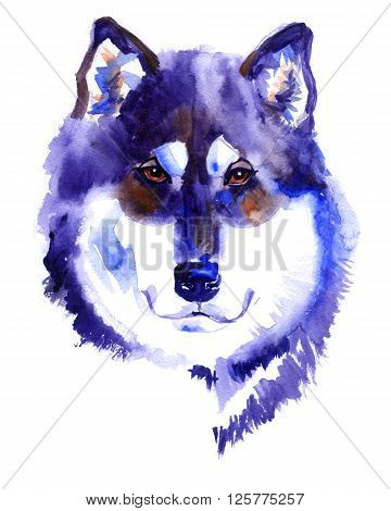 Watercolor Alaskan malamute dog on white background