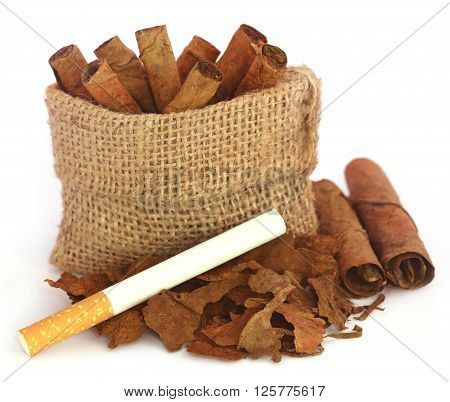 Rolled dry tobacco leaves with cigarette over white background
