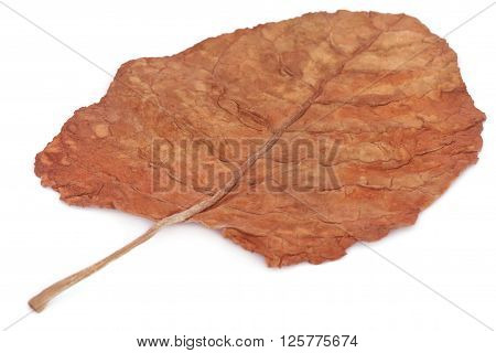 Whole dry tobacco leaves over white background ** Note: Shallow depth of field