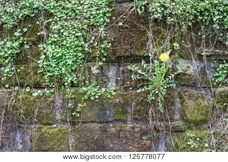 Grey mossy wall background with small plants on it