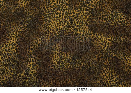 Leopard Backgroung