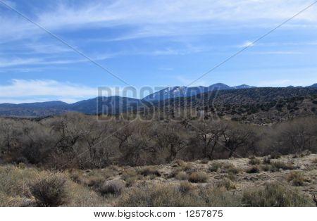 Winter At A Desert Creek