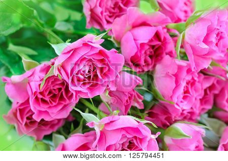 Romantic background with pink roses. The concept of holidays