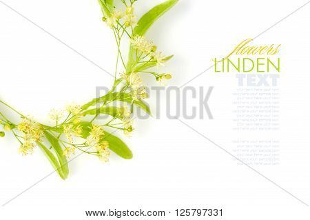 Flowers of linden tree on a white background ** Note: Soft Focus at 100%, best at smaller sizes