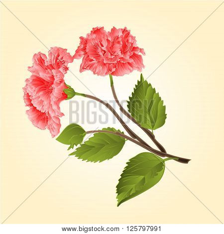 Pink hibiscus stem tropical flower vector illustration