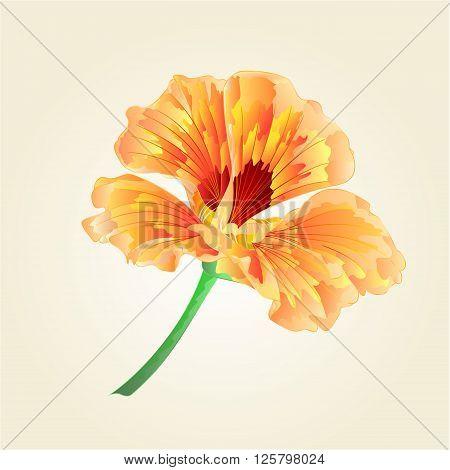 Watercress flower vegetable healthy food vector illustration