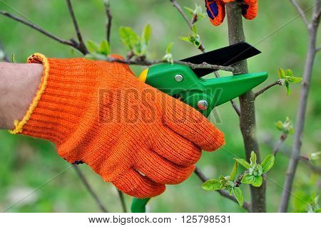 Hands with gloves of gardener doing maintenance work cutting the tree