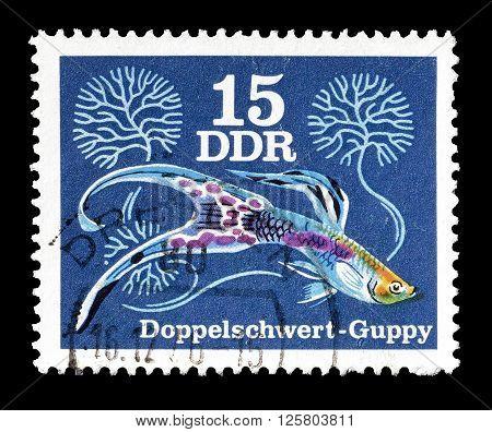 GERMAN DEMOCRATIC REPUBLIC - CIRCA 1976 : Cancelled postage stamp printed by German Democratic Republic, that shows Double Sword Guppy.