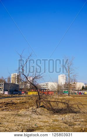 POZNAN POLAND - MARCH 17 2016: Damaged tree on a construction area with buildings in the background