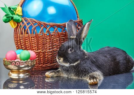 Black rabbit lies near the basket with a balloon and a vase with eggs