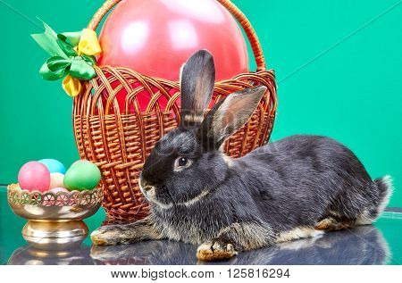 Basket with red balloon, vase with Easter eggs and rabbit