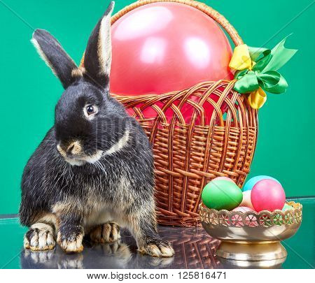 Purebred rabbit sitting near wicker basket and a vase with Easter eggs