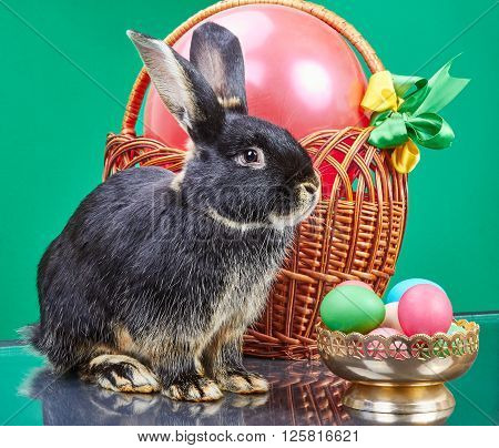 Wicker basket near the Black Rabbit and vase with Easter eggs