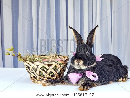 The rabbit with a bow at the neck is near a beautiful basket