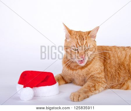 Orange tabby cat laying next to santa hat with mouth open like that did not taste very good