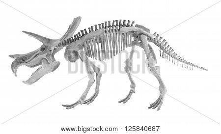 triceratops and styracosaurs bone (Toy) on white background, clipping path