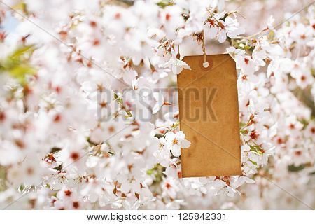 paper vintage tag in Spring with blossom cherry flower sakura