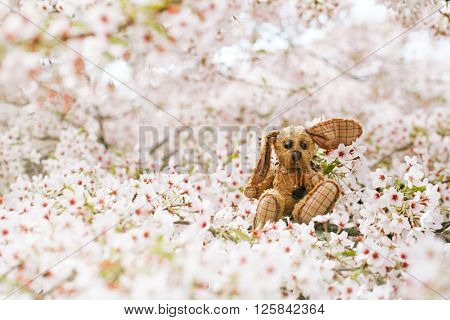 Little bunny  in Spring with blossom cherry flower sakura, perfect postcard