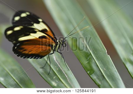 The tropical colorful butterfly on the flower closup picture.