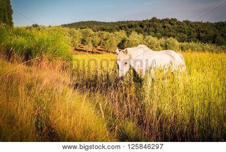 Wild Horse On Farmland