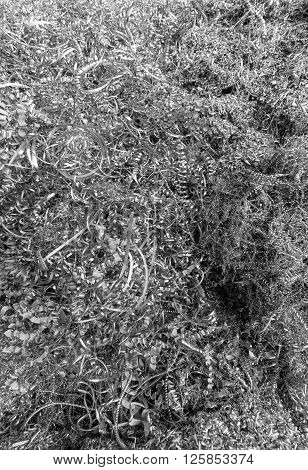 Heap with waste of silver twisted metal shavings in close-up