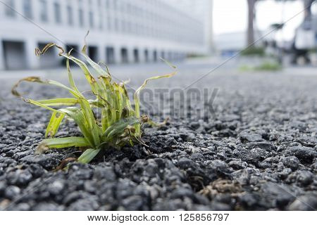 Green grass struggling to grow out of a road asphalt