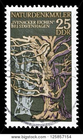GERMAN DEMOCRATIC REPUBLIC - CIRCA 1977 : Cancelled postage stamp printed by German Democratic Republic, that shows Ivenacker of oaks.