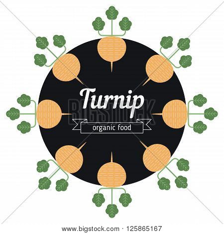 Turnip vegetables illustration. Healthy Organic vegetarian food.