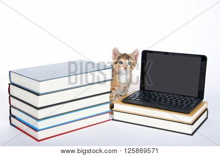 Female calico tortie tabby kitten sitting next to a miniature laptop type computer looking forward and up screen blank for your message. Piles of books.