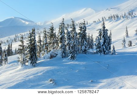 Icy Snowy Fir Trees On Winter Slopel.