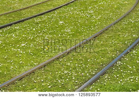 Rails on a green meadow with many daisies ** Note: Shallow depth of field